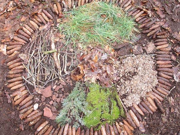 Fruehlingsmandala-Wald