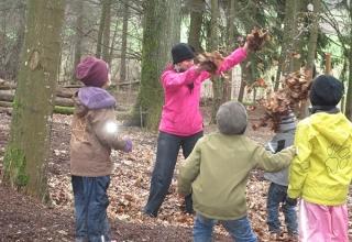 Blaetterdusche-im-Wald