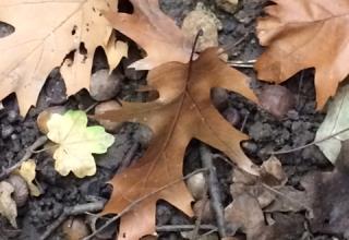 Herbstfundus-Gehmeditation