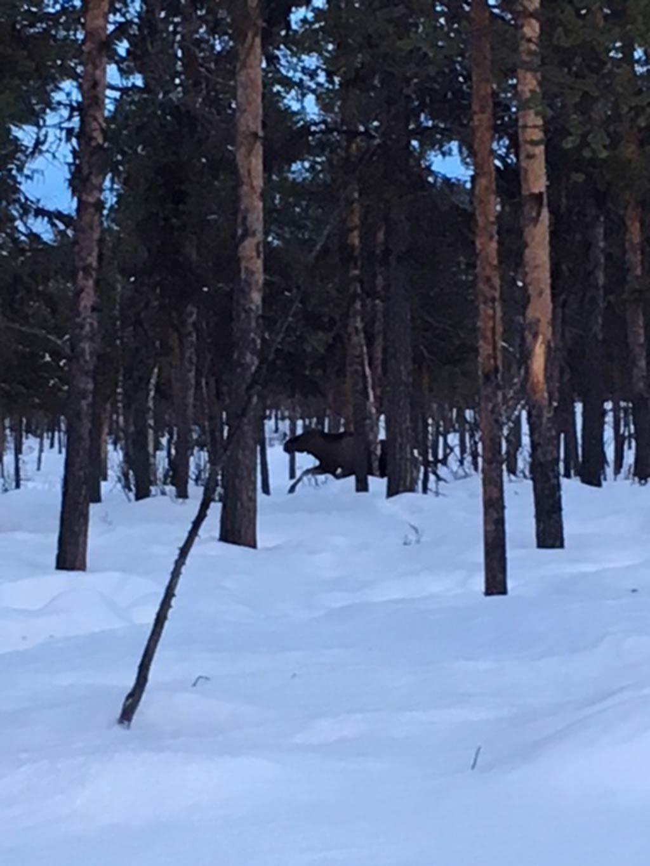 Lappland-Abenteuer-54