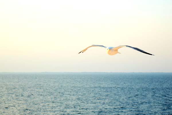 Möwe fliegt über dem Meer