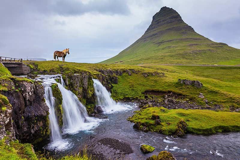 Wasserfall, Natur und Pferd in Island