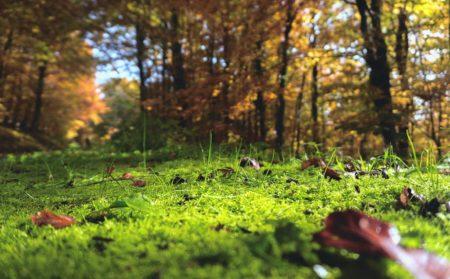 PURE & POSITIV Artikel Foto Waldboden 10/2018