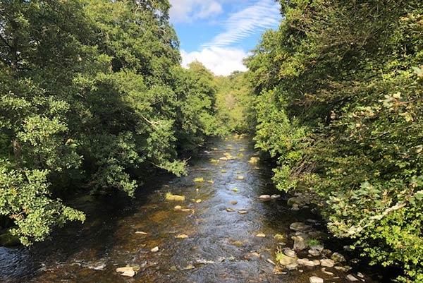 Bach im Wald in Schottland