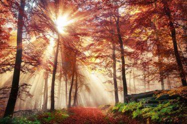 Waldbaden gegen Winterblues