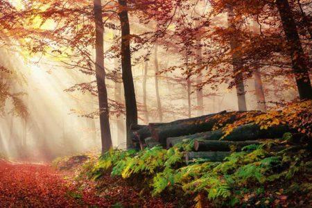 Waldlichter und Nebel