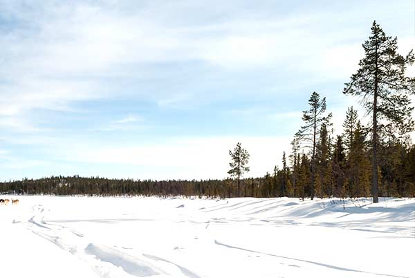Winter Schnee & Wald in Lappland